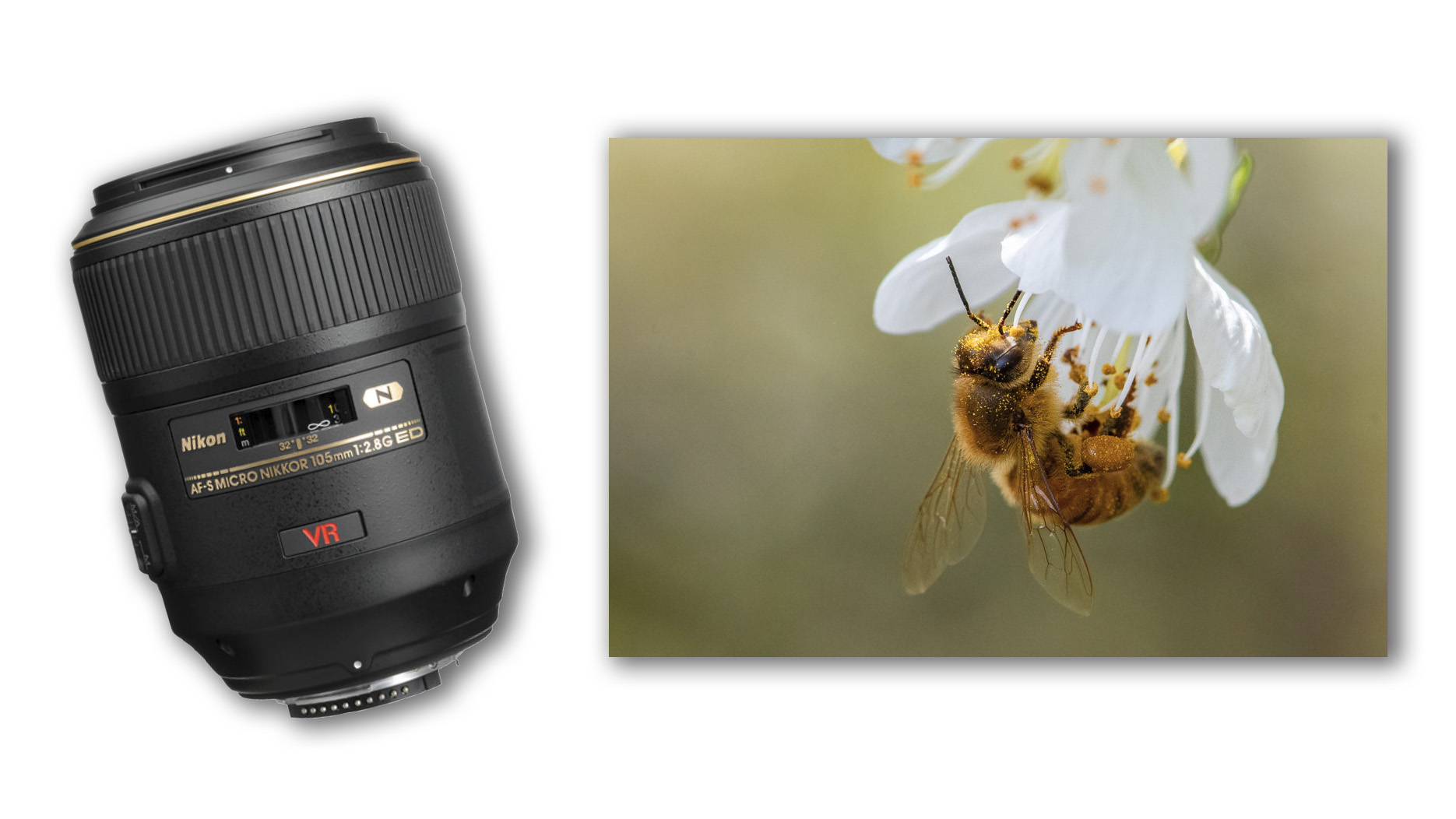 Macro photography with the Nikon VR 105mm f/2.8 and D850