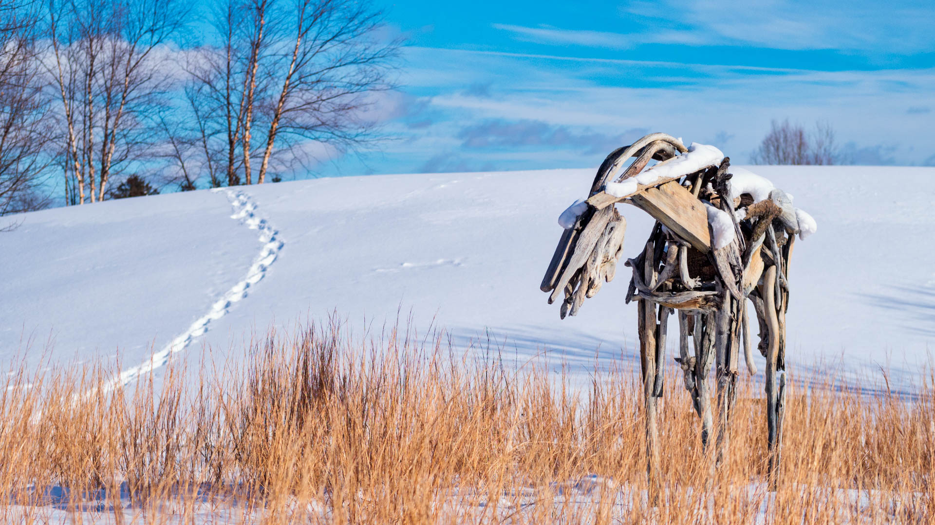 Looking at how to photograph in the snow | Photofocus
