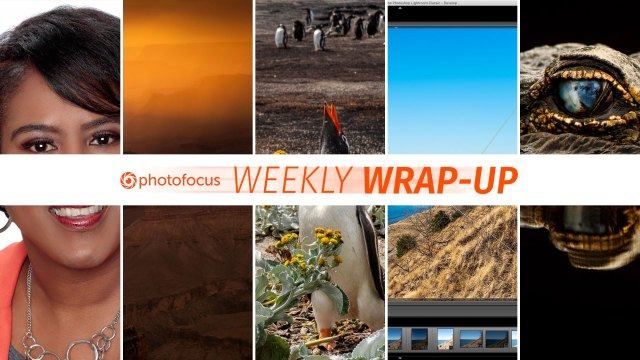 Weekly Wrap-Up: February 3-9, 2019