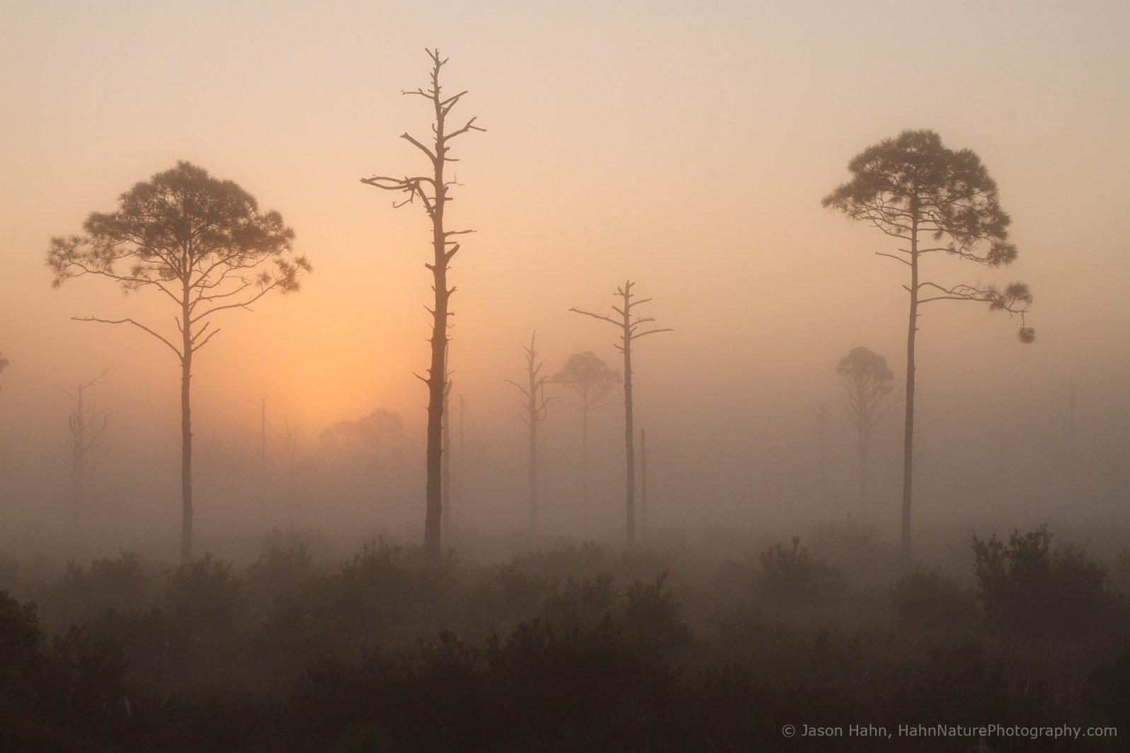 Ground fog at sunrise, softening the scene