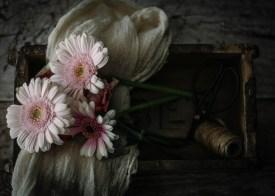 Julie Powell_flowers-8