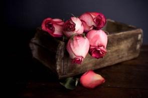 Julie Powell_styling-7