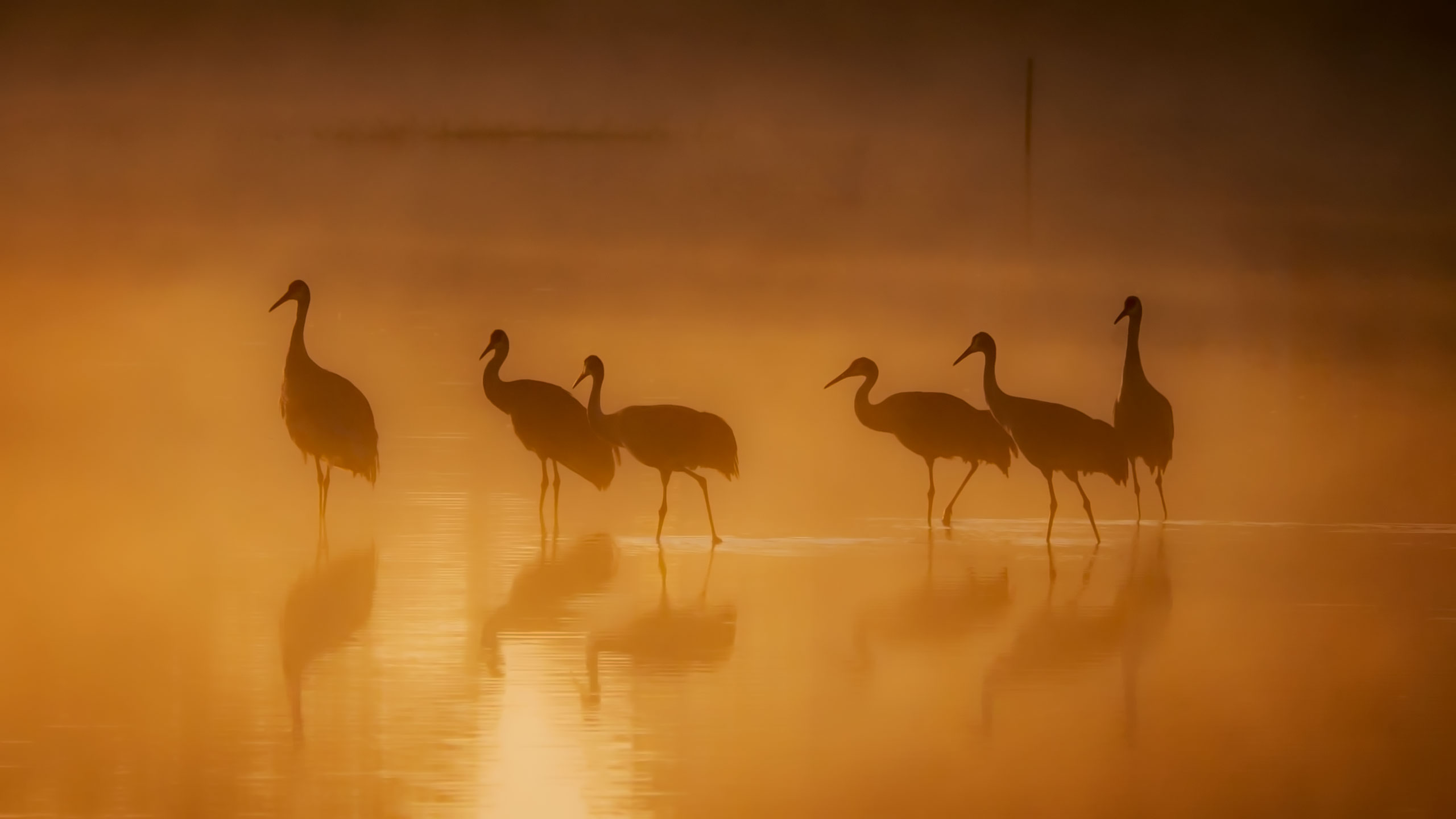 bird photography in the early moning fog