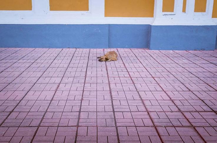 Stray dog in Granada, Nicaragua