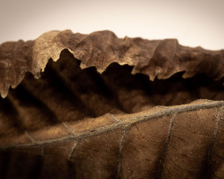 dried leaf macro photo
