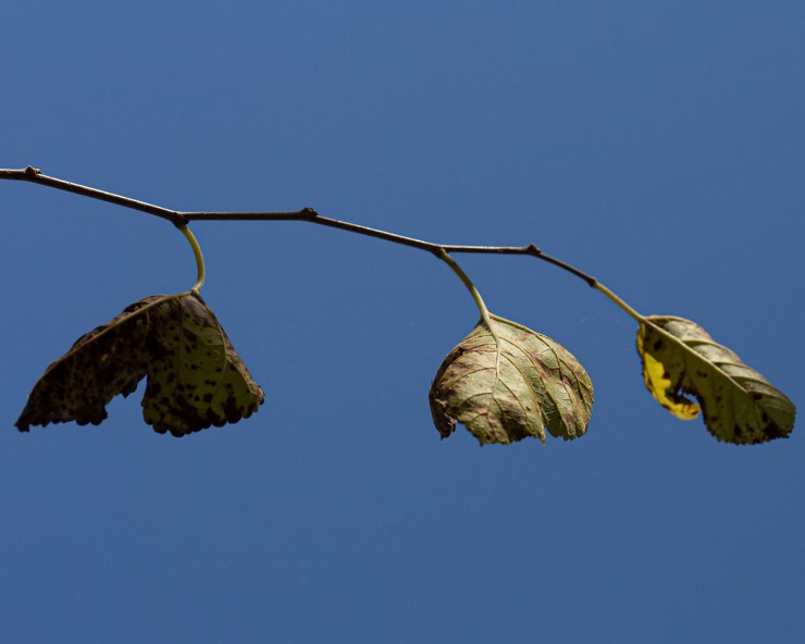 fall leaves on branch photo