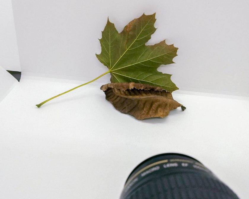 green leaf with dried leaf macro set up