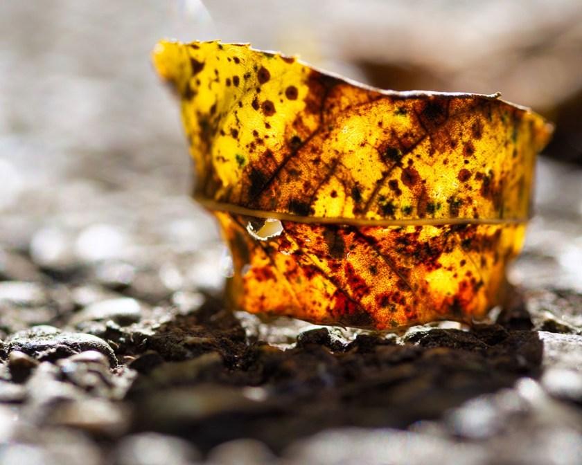 yellow fall leaf in sun photo