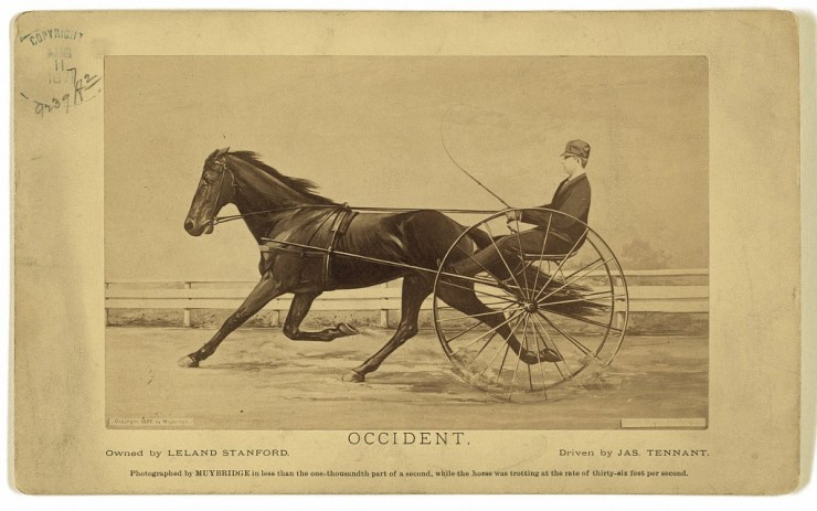 Leland's racehorse, Occident, photographed by Eadweard Muybridge. The horse is moving at 36 feet per second. Its motion was frozen by one of Muybridge's shutters at 1/1000th of a second