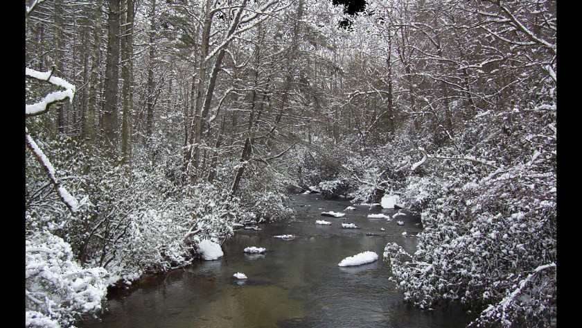 Winter scene with trees and underbrush on the banks of a slowly flowing stream