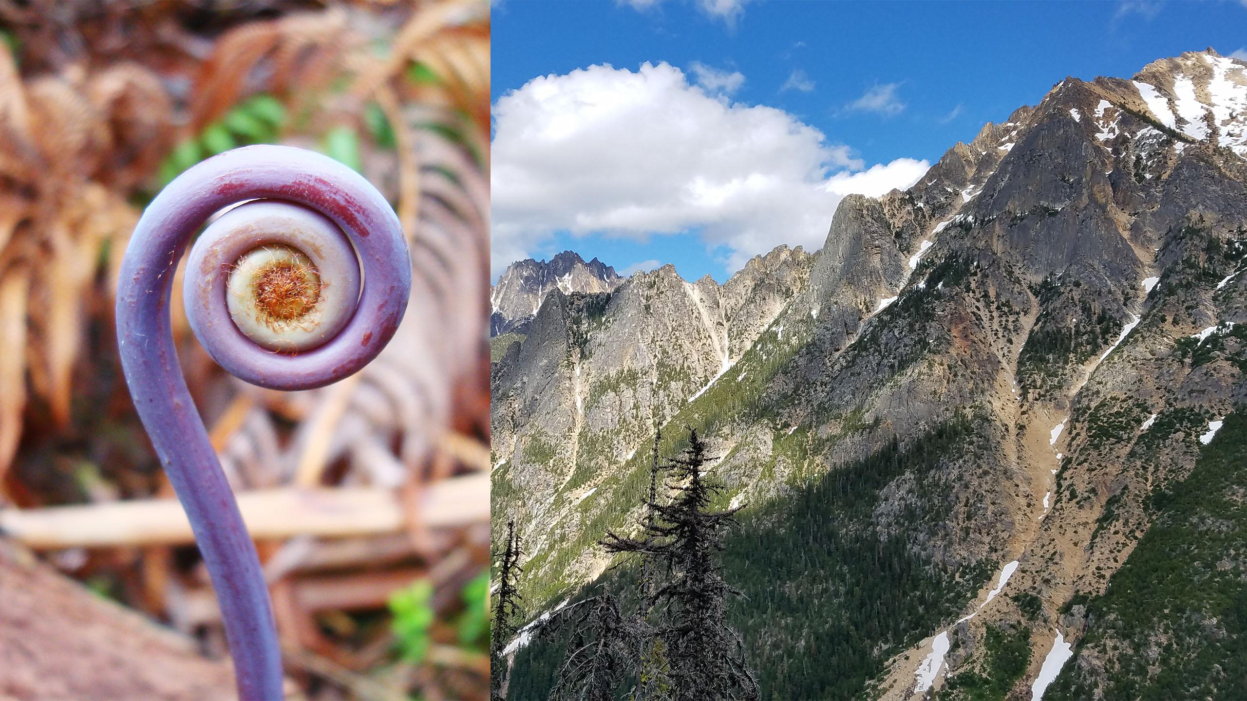 Understanding depth of field in nature photography