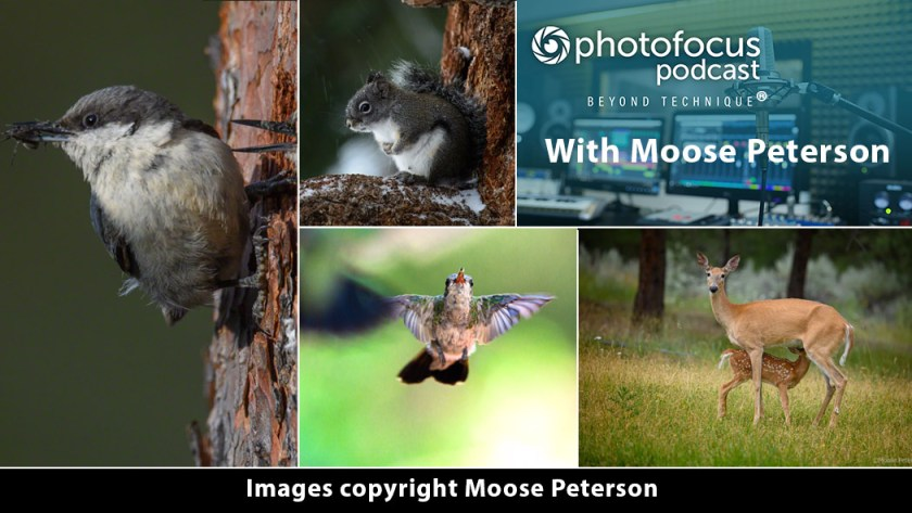 Images Copyright Moose Peterson