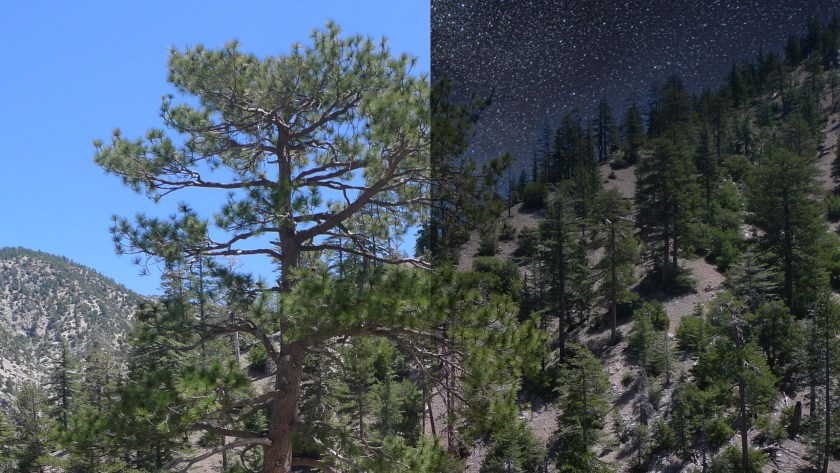 Sky replacement round two: Luminar<sup>AI</sup> vs. Photoshop