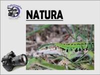 natura_icon