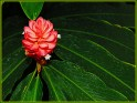 The_Flower_blooms_and_The_leaves_are_green_with_Envy by John_Tarsha