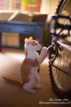 Photographe Paris, photographie de chaton