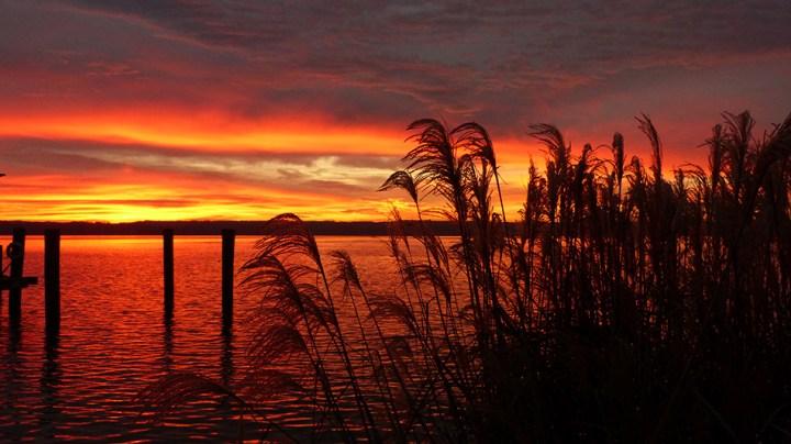 sunrise-thru-grass