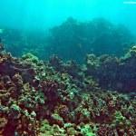 """Towering Coral"""