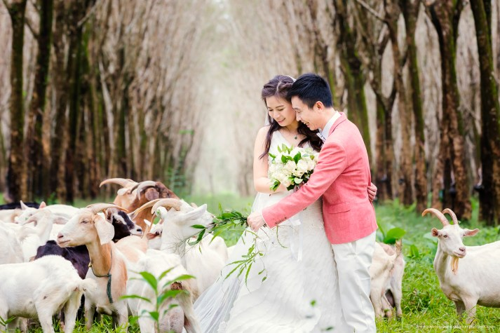 pre-wedding-at-rubber-plantation