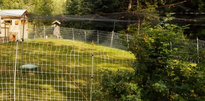 DSCN0632 chicken boundaries 2015
