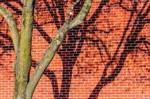 Two Trees - Photographer Alex Sablan
