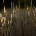 Morning Light - Dayton Photographer Alex Sablan