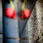 Flowers at the Wall - Dayton Photographer Alex Sablan