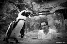 Scott and African Penguin (who knew africa had penguins?)