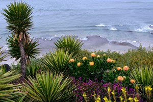 Overlooking the Pacific Ocean from Self-realization Fellowship Gardens near Encinitas, California.