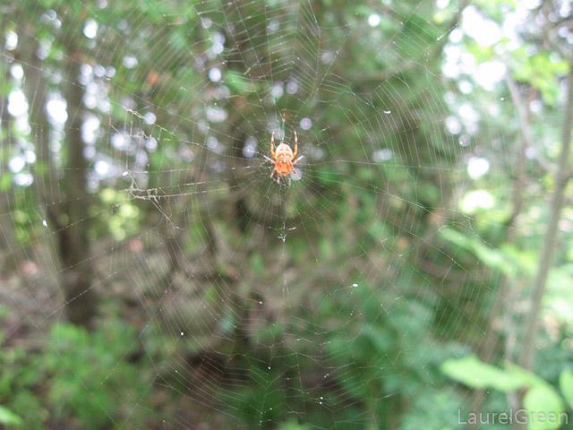 Orange Spider and Web
