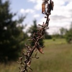 Unknown Dead Plant
