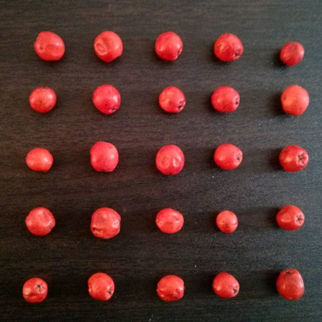 rowan berries lined up in a square pattern