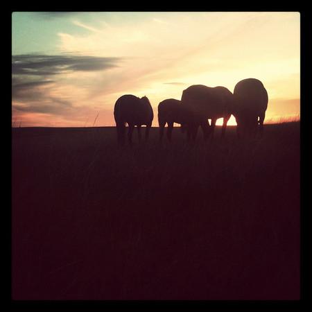 sunset via the iphone...