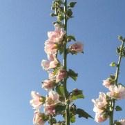 Thenh the sun through the petals.