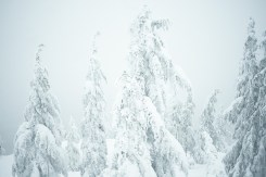 Foggy view from lookout at the top of Dog Mountain with snow covered trees in Vancouver, BC