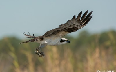 On the Pascagoula River