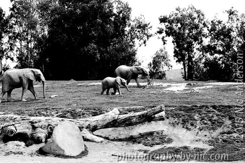 Gungy Elephants