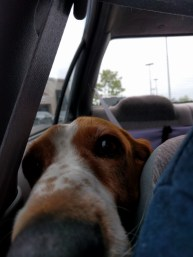 Penny on the trip home