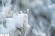 The wedding ring in snow at Grand Canyon