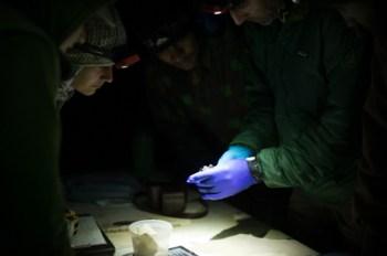 4.25.17 Bat Study Rowell Rd Terri Attridge (19 of 32)