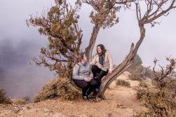 Grand Canyon Juniper tree photo