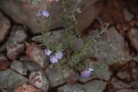 9.1.18 MR Amy and Jessica hike to Horseshoe Mesa photography by Terri Attridge-84