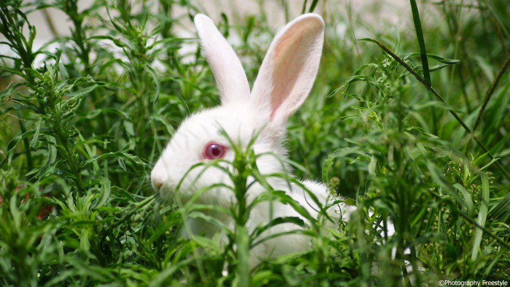 The Little white Bunny (5/5)