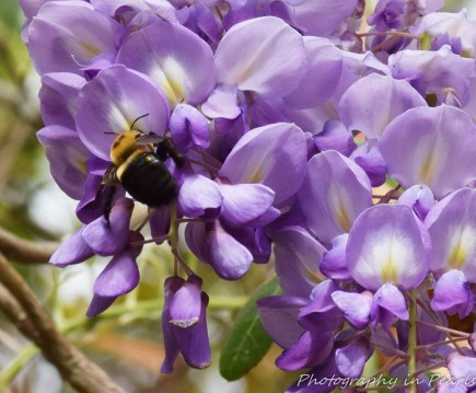 Bees-5