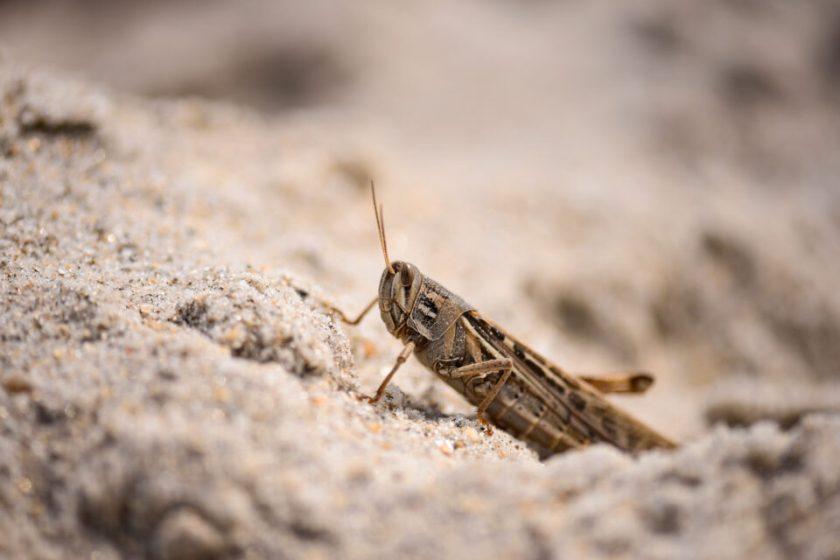 Cricket Macro