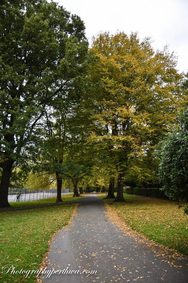 AutumnWaterTowerPark2