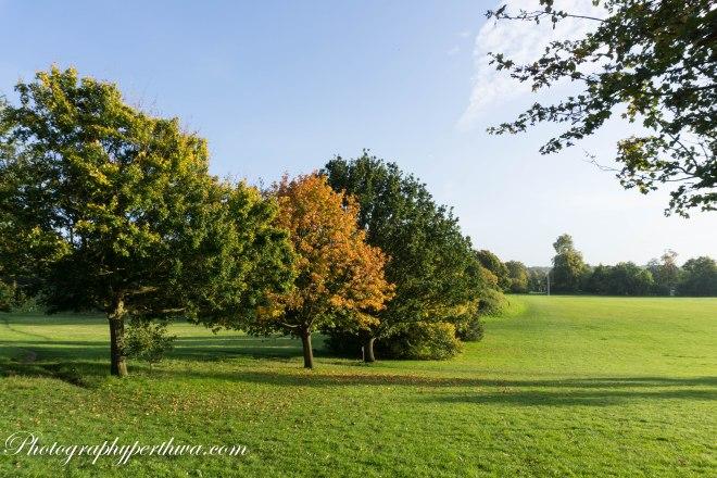 Loyd Park, Croydon