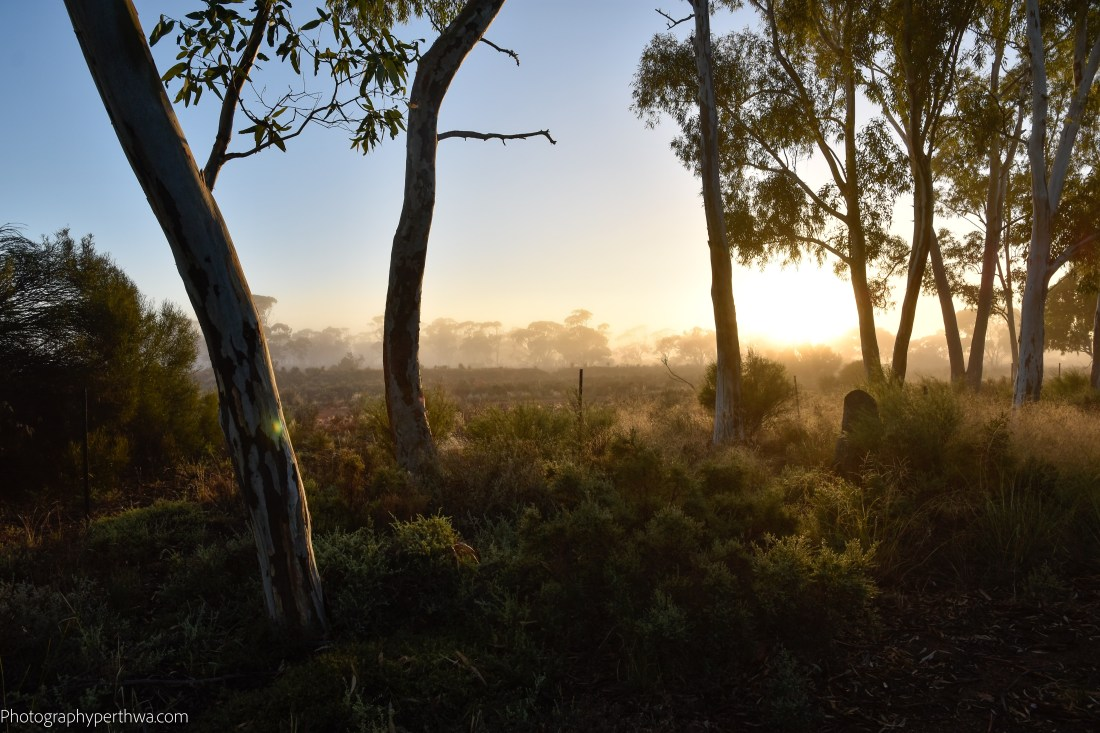 Misty morning at the Southern Cross Caravan Park (1 of 1)