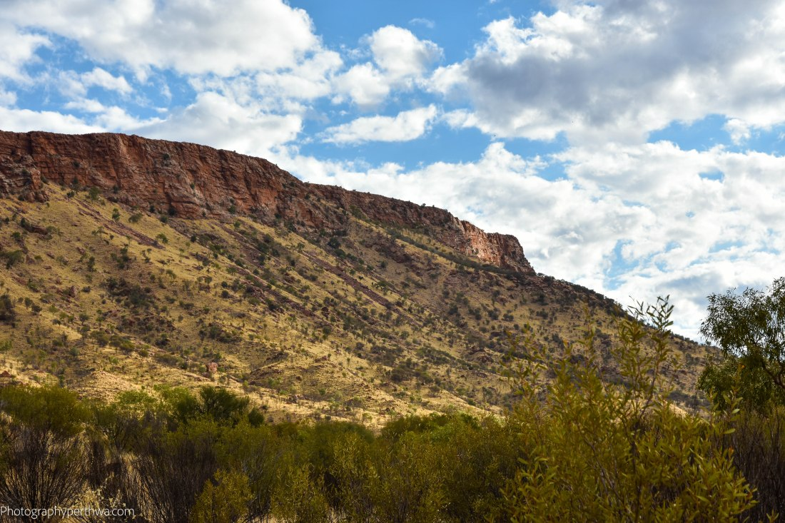 Alice Springs Desert Park - Mt Gillen (1 of 1)