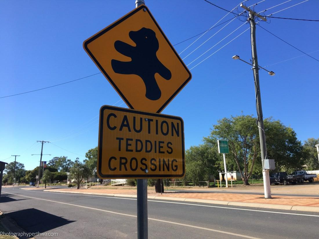 Teddies crossing (1 of 1)
